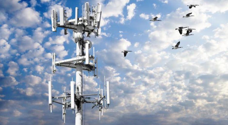 Rynek telekomunikacyjny powoli odżywa
