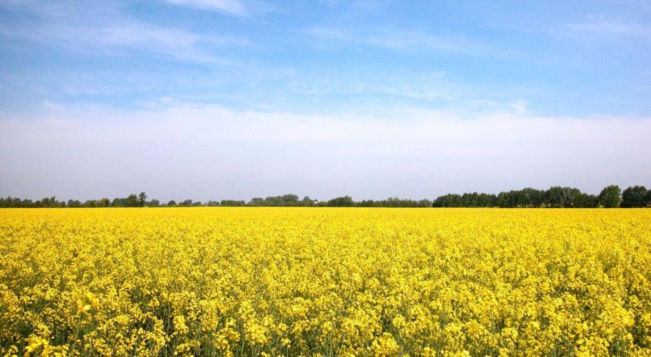 Czy biopaliwa mają przyszłość?
