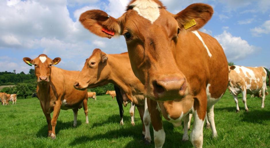 Czarny PR może zniszczyć reputację polskiej branży mięsnej