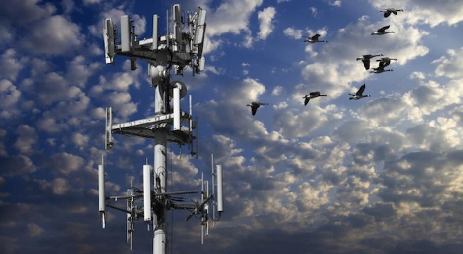 Hurtowy rynek telekomunikacyjny wciąż idzie w dół