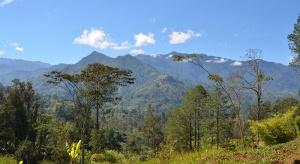 MŚ: Polacy mogą zbudować fabryki w Papui-Nowej Gwinei