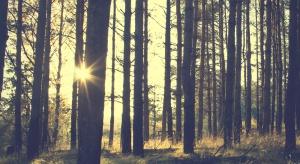 Lasy uratują polską politykę klimatyczną?
