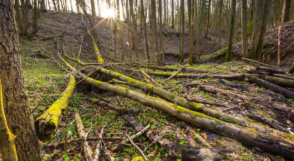 Drewno energetyczne w ustawie o OZE