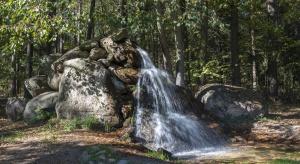 Stanowisko rządu o bioróżnorodności: brak źródeł finansowania