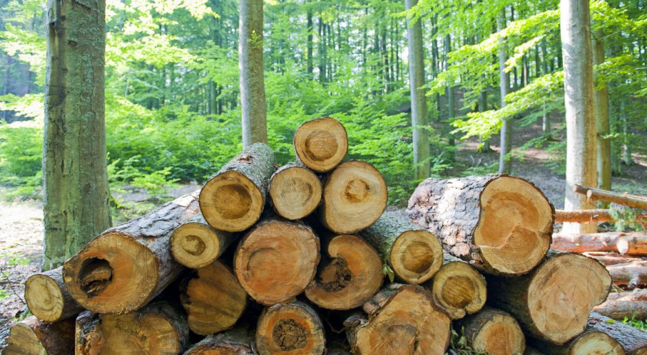 Warmińsko-mazurskie: Lokalni przedsiębiorcy obawiają się budowy dużego tartaku pod Nidzicą
