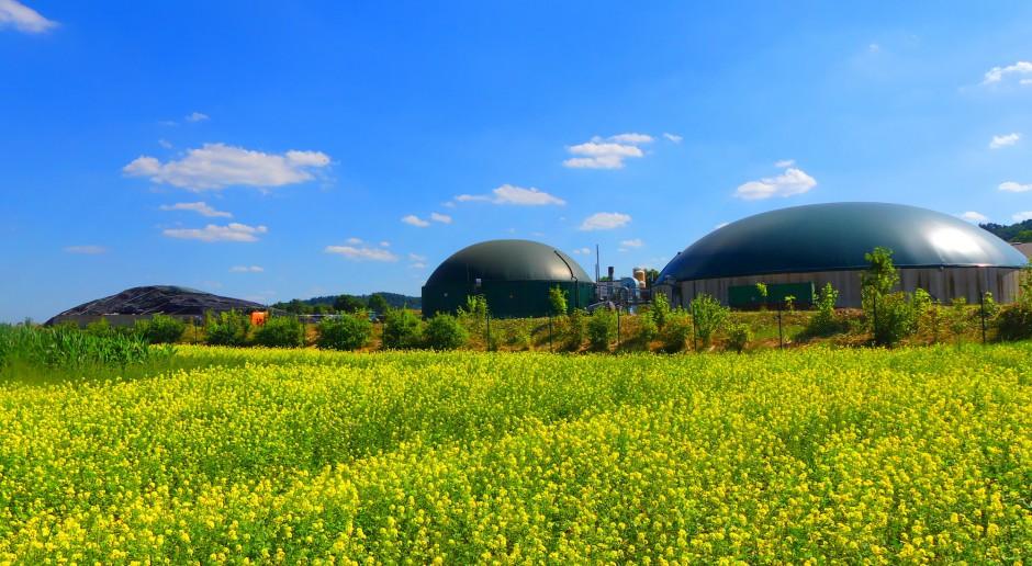 MDI Energia wybuduje elektrociepłownię na biogaz rolniczy w Chorzelach