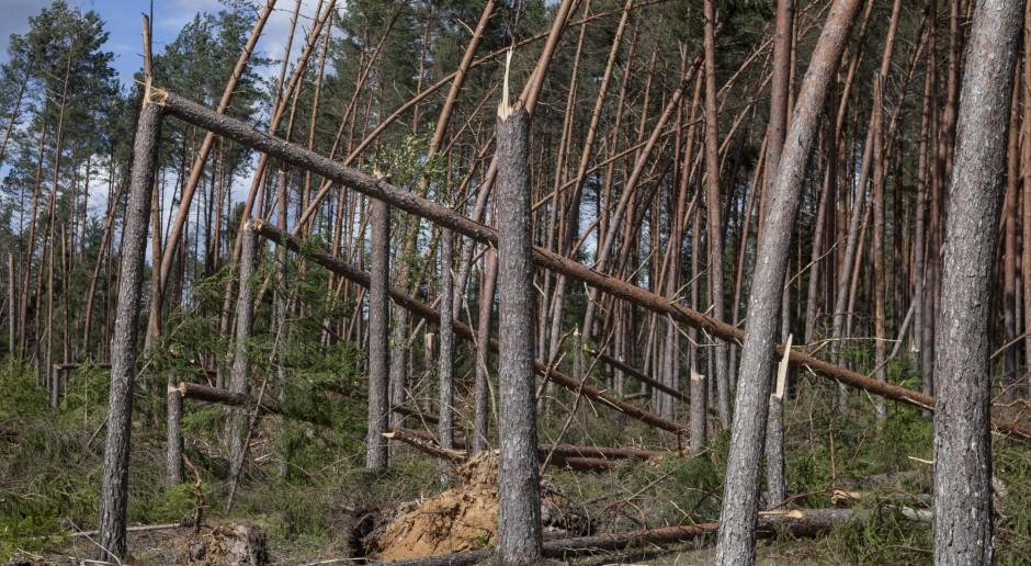 JSW włączy się w Leśne Gospodarstwa Węglowe