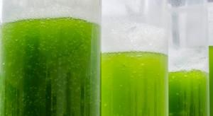 Biopaliwa z glonów? Płocki koncern kontynuuje badania