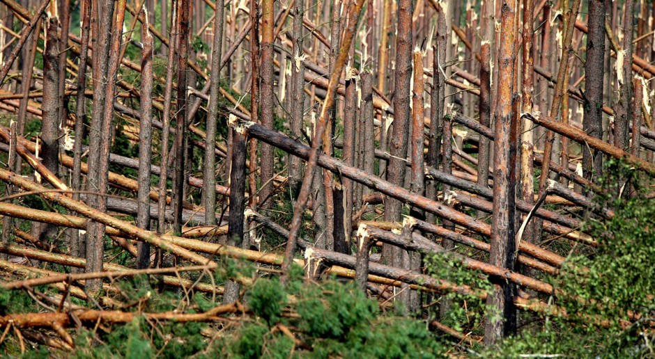 LP: W ostatniej dekadzie było mniej pożarów lasów państwowych