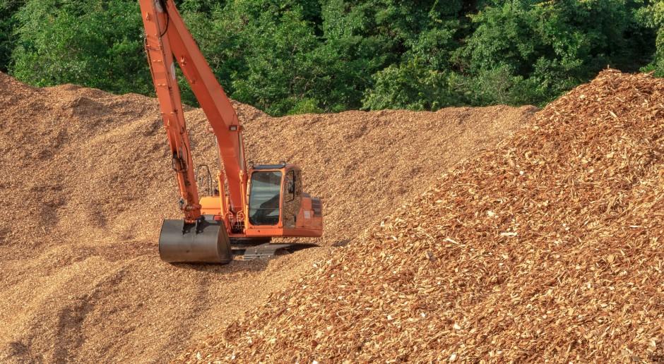 Naukowcy stanowczo: spalanie drewna nie jest zieloną energią