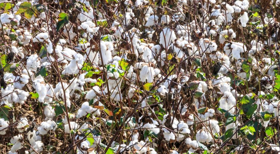 #AzjaTech. Zysk z bawełnianych odpadów?