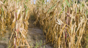 Rolnicy nie mają na co czekać ze składaniem wniosków o pomoc po suszy