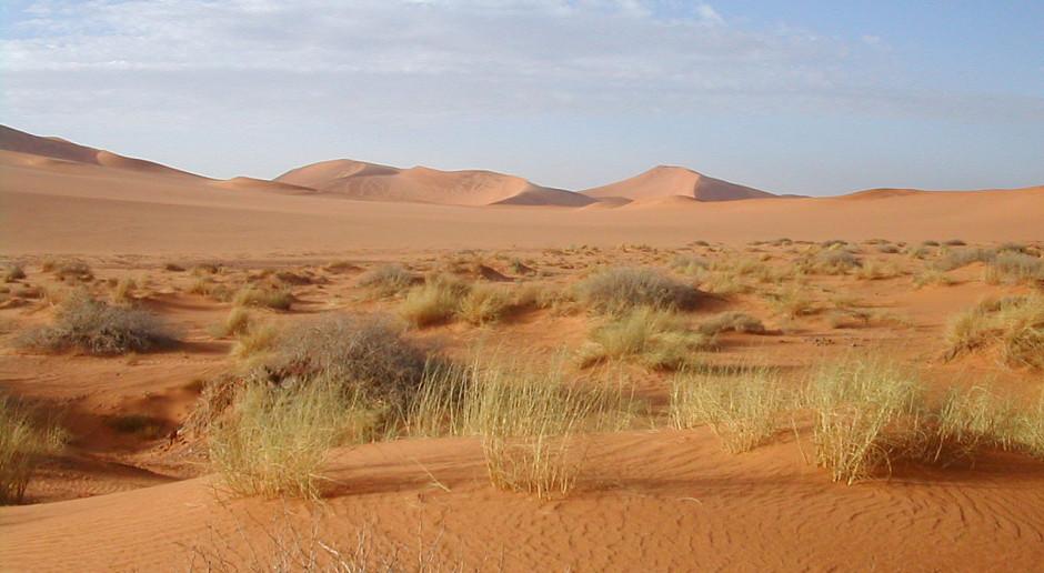 BP chce sprzedać swoje saharyjskie aktywa