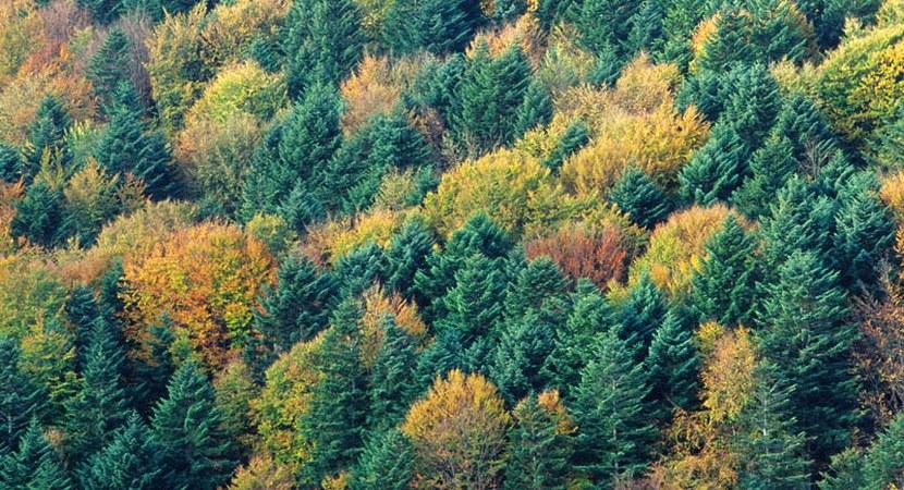 Lasy to naturalne filtry wyłapujące CO2. Fot. archiwum PTWP
