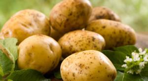 Policja pomoże w walce z niedoborem i drożyzną ziemniaków