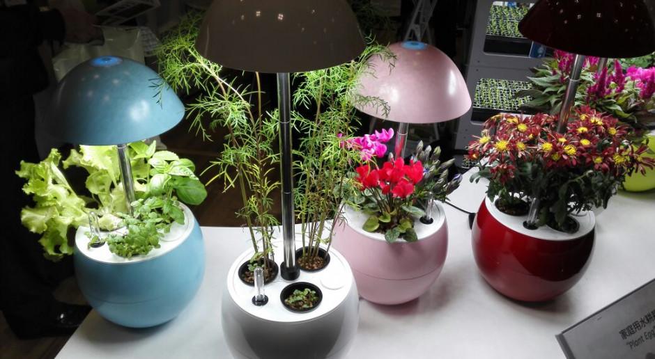 Oświetlają rośliny i zioła dla firm i domów. Bazylia rośnie nawet w łazience