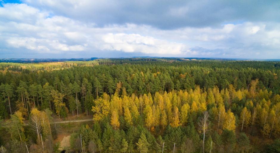 Emitel pomoże walczyć z największą plagą lasów