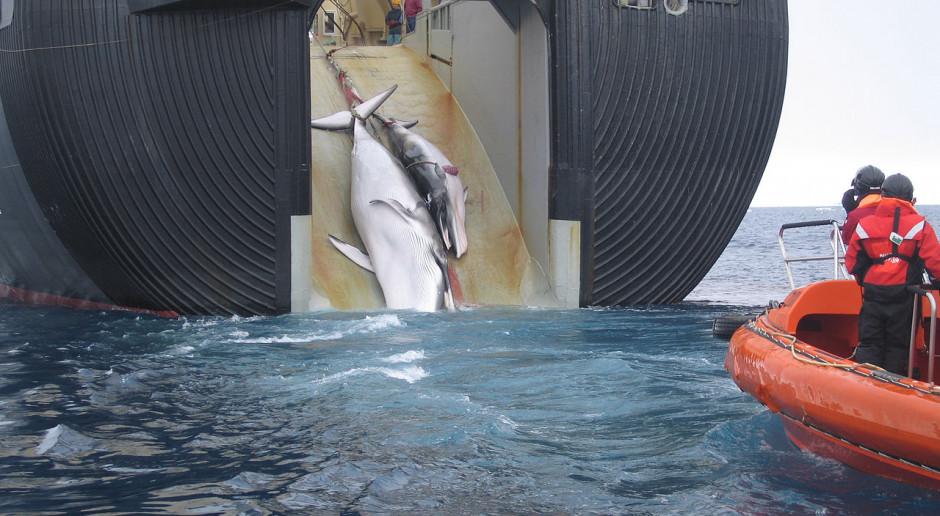 Moby Dick w Japonii