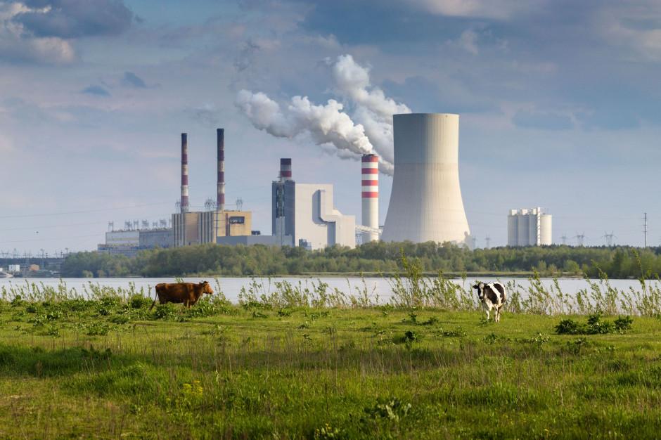 Zielona Elektrownia Połaniec, Kozienice - z konkretnym planem gazowym