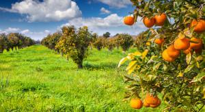 Matryca VAT wymaga dalszych prac, ale sadownicy już zadowoleni