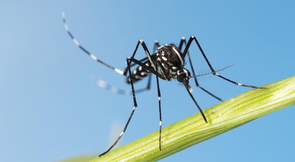 #Azjatech: Nowa metoda walki z malarią