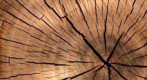 Branża ma dosyć walki o drewno