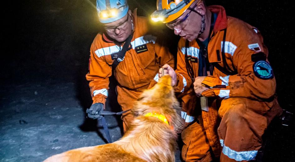 Psy pomogą w akcjach ratowniczych w kopalniach KGHM
