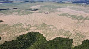 Dewastacja Amazonii bardzo przyspieszyła