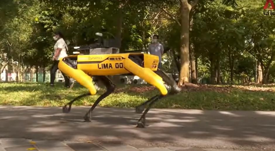 Pies-robot pilnuje dystansowania społecznego w Singapurze