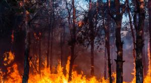 Hiszpania: Ponad 1000 osób ewakuowanych, pożar strawił 10 tys. ha lasów