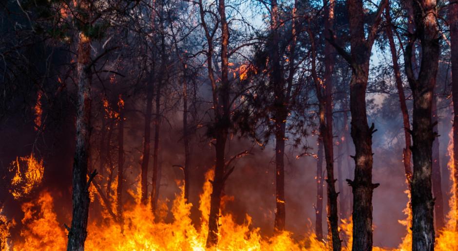 Hiszpania: Ponad 50 pożarów lasów głównie wskutek upałów