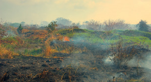 Mniej pożarów w lasach