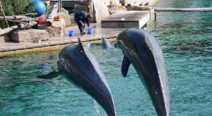 Delfin-android może zastąpić żywe zwierzęta w parkach rozrywki
