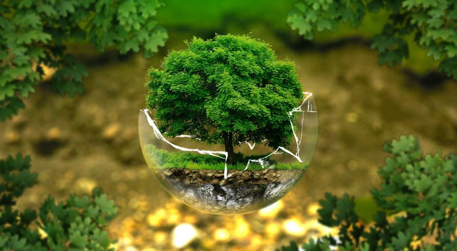 Francja: Ekologia wkracza na cmentarz