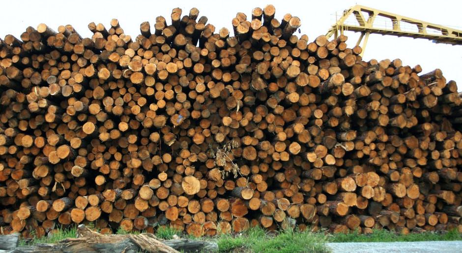 Eksport polskiego drewna znacznie większy niż podają Lasy Państwowe