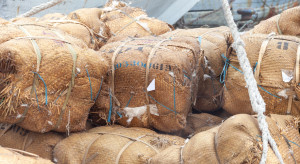 USA zakazują importu bawełny z chińskiego regionu Sinciang