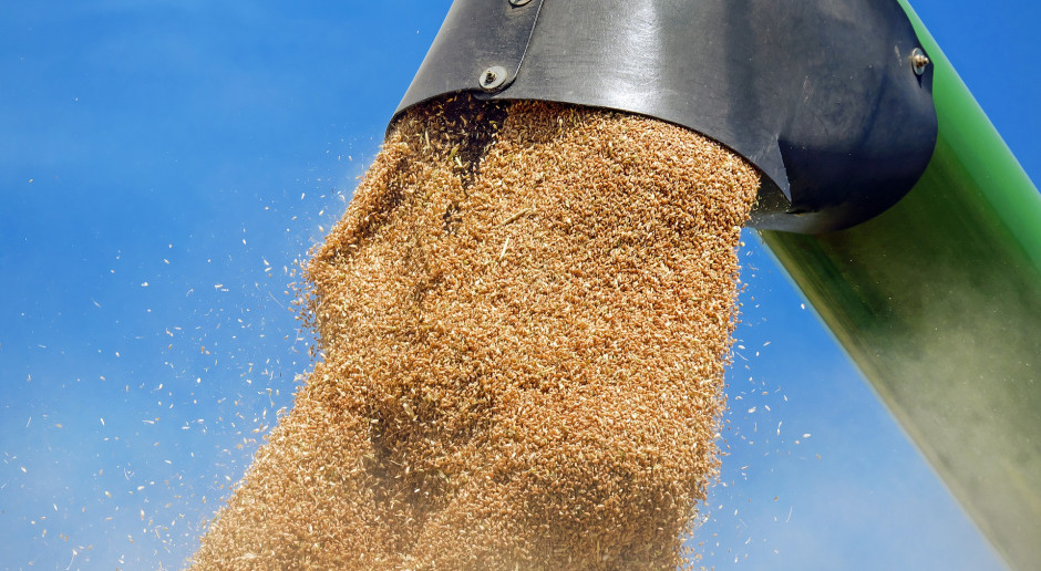 Ceny zbóż biją rekordy