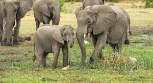 Nepal: Na grzbiecie słonia jak królowa