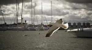 Port Hel-Zachód zostanie wyremontowany