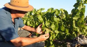 Ponad 200-procentowe cła na wino. Chiny testują Zachód