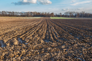 Obecna sytuacja w rolnictwie doprowadzi do protestów