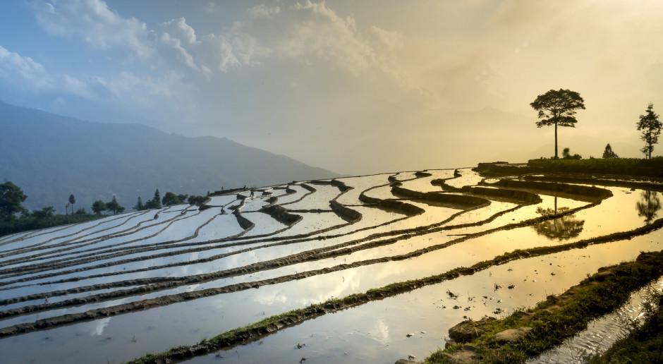 """Chiny: Zmarł """"ojciec ryżu hybrydowego"""", agronom Yuan Longping"""