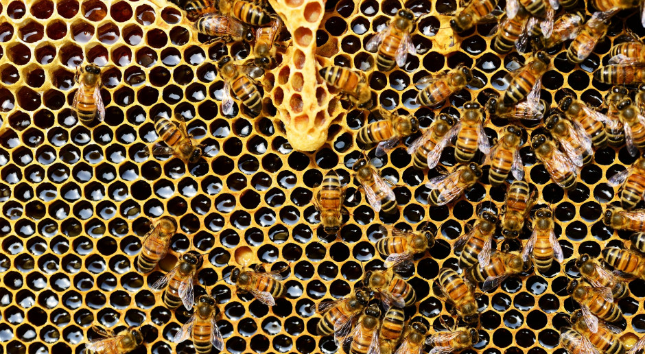 Warmińsko-mazurskie: Pszczelarze kręcą pierwsze wiosenne miody, ich ceny wzrosły