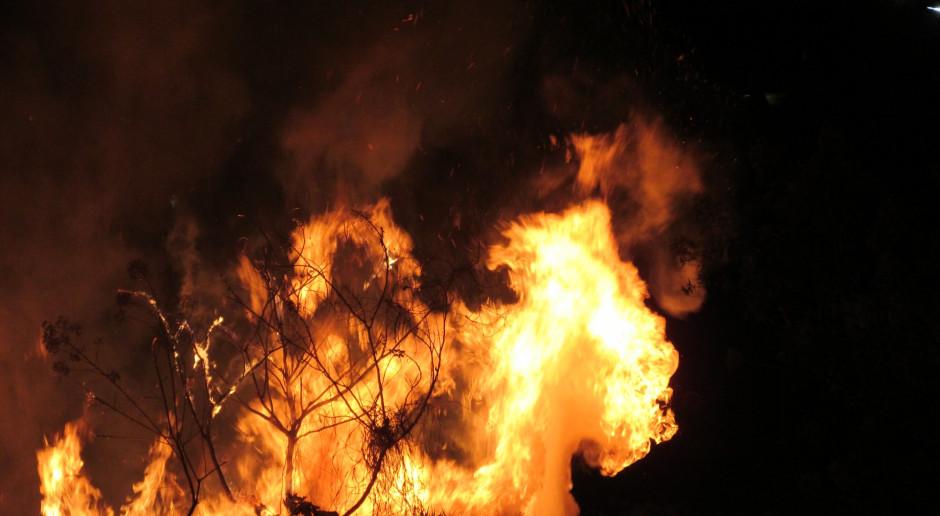 Rosja: Tysiące strażaków walczą z rozległymi pożarami lasów, na Syberii trzeba ewakuować wsie