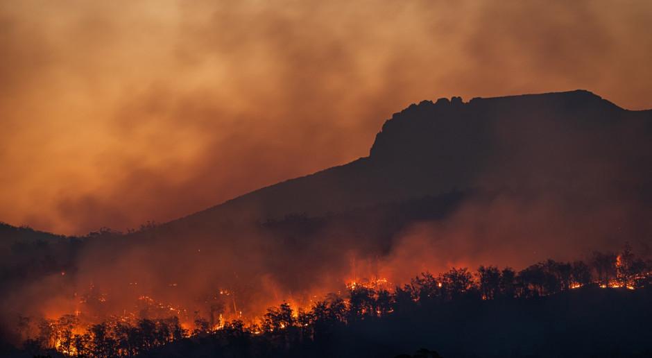Cypr: Pożar szalejący u podnóża Troodos jest największy od co najmniej od 20 lat