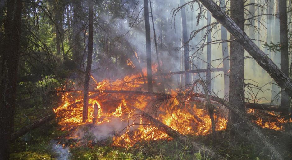 Rosja: Pożary lasów w obwodzie czelabińskim, zginęła jedna osoba