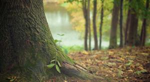 Lasy zamienią się terenami ze Skarbem Państwa. O jakie inwestycje chodzi?