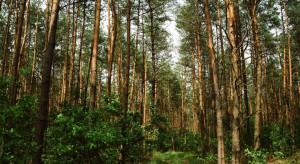 Specustawa leśna pod inwestycje w Jaworznie i Stalowej Woli do dalszych prac