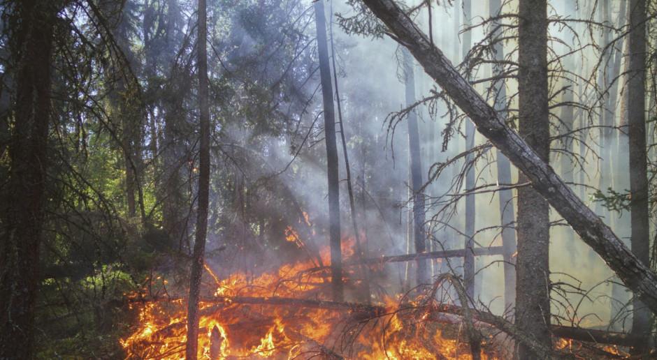 Włochy: Gigantyczne pożary na Sardynii, ewakuacja mieszkańców