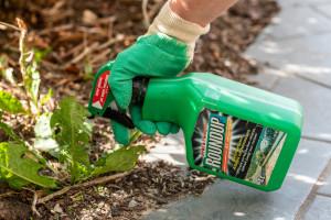 Francja karze Monsanto za nielegalne pozyskiwanie danych